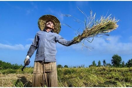 چه نکاتی را هنگام باغبانی در فصل گرما رعایت کنیم؟